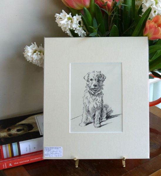 Little fluffy Terrier - sitting looking ahead 1930's print by Lucy Dawson - Ter D17